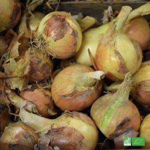 Oignon jaune bio nouveau cultivé et récolté pour Ma Ferme Bio par nos partenaires Maraichers bio en Alsace et Moselle