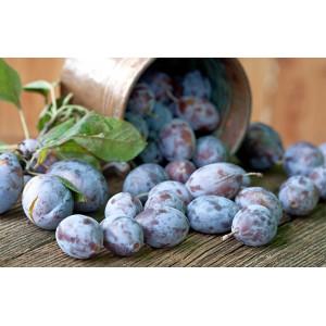 Prune bleue bio des vergers d'Alsace cultivée par nos partenaires producteurs bio locaux