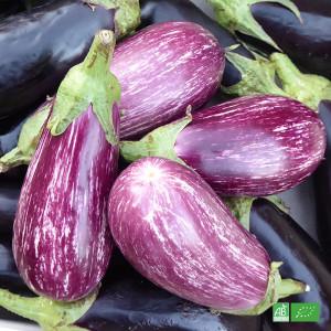 Aubergine zébrée bio cultivée dans les champs de nos maraichers bio en Alsace et Lorraine