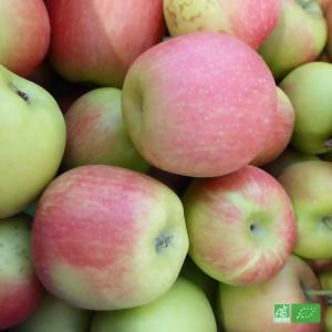 Pommes bio DELBARD ESTIVAL, pommes précoces d'été au goût doux et sucrée, en direct des Producteurs bio d'Alsace