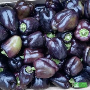 Poivron vert bio cultivé et récolté pour Ma Ferme Bio par nos producteurs partenaires en Alsace Lorraine