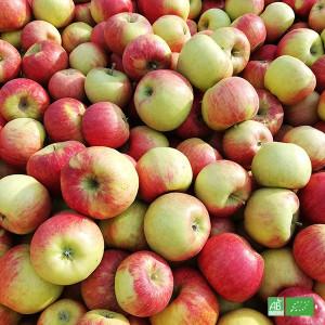 Box 2kg Pommes bio de table, issues des récoltes de Producteurs locaux certifiés Bio AB en Alsace et l'Est de la France