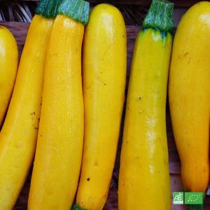 Courgettes jaunes bio issus de l'Agriculture Biologique, cultivé par nos partenaires Producteurs bio en Alsace et Moselle
