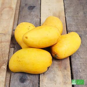 Mangue bio Ataulfo à peau jaune et à la forme allongée cultivée par nos partenaires Producteurs bio d'Amérique Latine