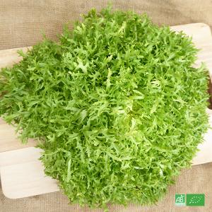 Salade Scarole bio frisée cultivée par nos Partenaires Maraîchers bio en Alsace et Moselle