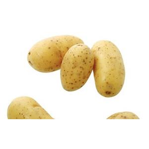 Pomme de terre bio primeur Charlotte Alsace Lorraine