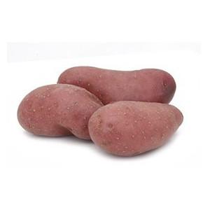 Pomme de terre bio primeur Rubis Alsace Lorraine