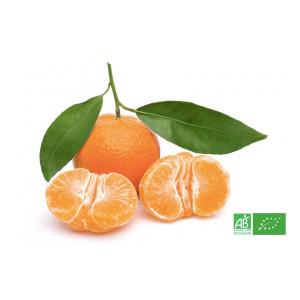 Mandarine bio cultivée par nos partenaires agriculteurs bio pour notre maraicher bio en Alsace Lorraine