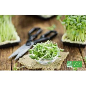 Cresson bio frais à couper, en direct de notre producteur maraicher bio en Alsace Moselle