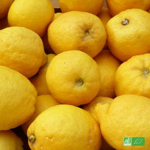 Citron jaune bio en direct des Producteurs de Sicile