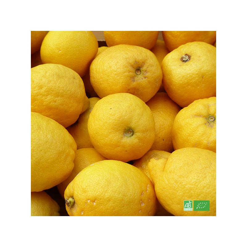 Citron jaune bio de Sicile, en direct des Producteurs d'Italie