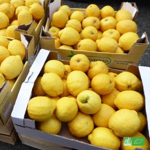 Lot 10kg de Citrons bio de Sicile, en direct des Coopératives d'Italie