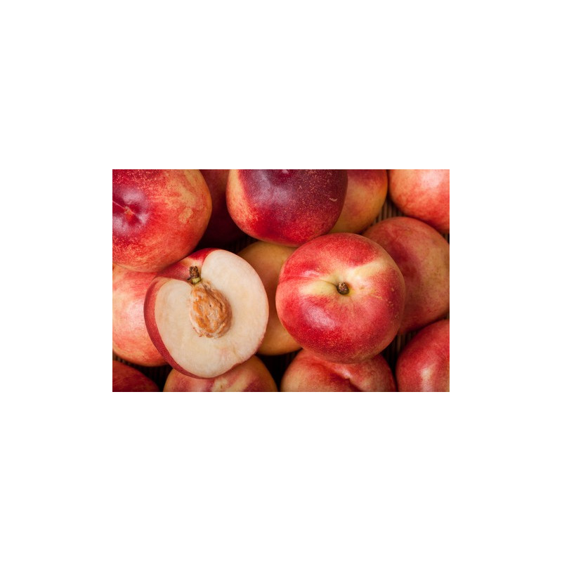 Nectarine blanche cultivée aux normes bio AB pour le compte de notre ferme écologique VEGETAL RESPEKT