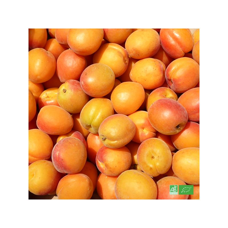 Box d'Abricots bio du Roussillon bio cultivé aux normes bio AB