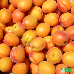 Abricots bio en gros