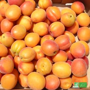 Abricots bio pour confitures