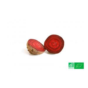 Betterave rouge nouvelle biologique cultivée par nos partenaires Maraîchers bio en Alsace et Moselle