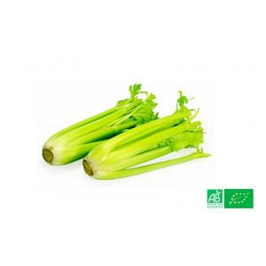 1kg de Celeri branche bio cultivé dans nos champs à la ferme VEGETAL RESPEKT en Alsace Moselle