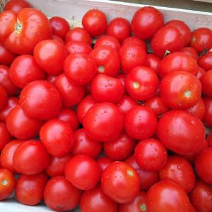 Tomates rondes bio en direct des Producteurs bio locaux en Alsace