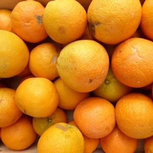 Oranges bio de table en direct des producteurs certifiés bio d'Espagne