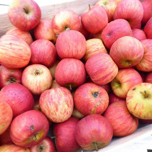 Pommes bio à manger d'Alsace en direct des Producteurs locaux certifiés bio