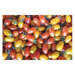 Tomates cocktail biologique des fermes bio locales d'Alsace et Moselle
