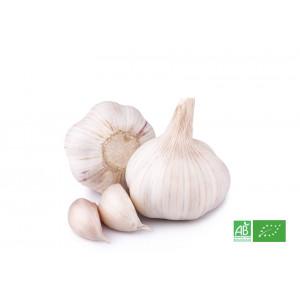 Ail blanc bio cultivé selon les normes AB de l'agriculture biologique