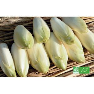 Endivette verte bio du producteur maraicher bio, livraison gratuite sur points relais en Alsace Moselle
