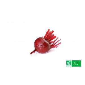 Betterave rouge nouvelle cuite poussant dans les champs de notre ferme écologique VEGETAL RESPEKT