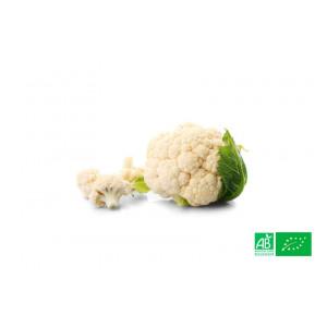 Chou fleur biologique cultivé dans les champs de la ferme écologique VEGETAL RESPEKT