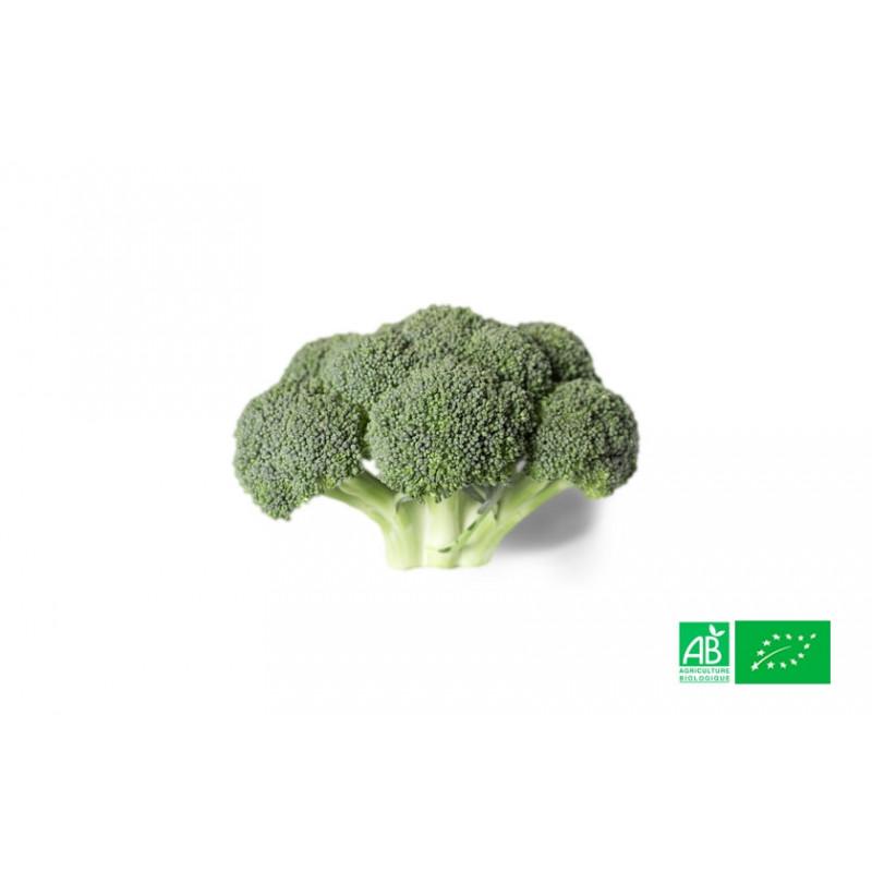 Chou brocoli biologique cultivé dans les champs de la ferme écologique VEGETAL RESPEKT