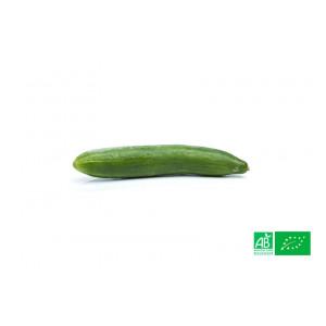 Concombre long biologique cultivé dans les champs de la ferme écologique VEGETAL RESPEKT