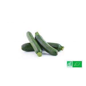 Courgette verte d'Alsace poussant dans les champs de notre ferme écologique VEGETAL RESPEKT