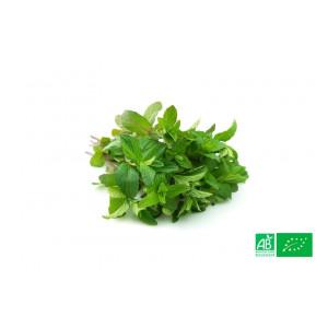 Menthe fraîche cultivée aux normes bio AB dans les champs de notre ferme écologique VEGETAL RESPEKT