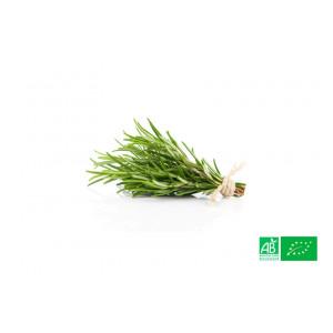 Romarin cultivé aux normes bio AB dans les champs de notre ferme écologique VEGETAL RESPEKT