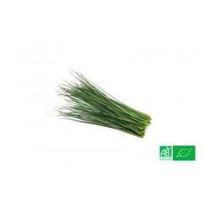 Ciboulette cultivée aux normes bio AB dans les champs de notre ferme écologique VEGETAL RESPEKT