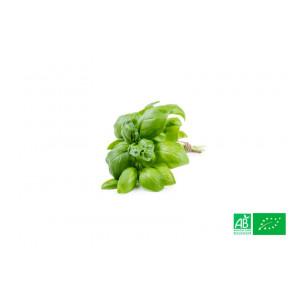 Basilic cultivé aux normes bio AB dans les champs de notre ferme écologique VEGETAL RESPEKT