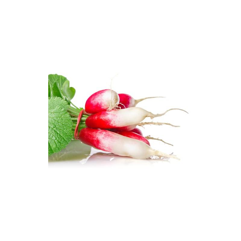 Radis rose blanc cultivé aux normes bio AB dans les champs de notre ferme écologique VEGETAL RESPEKT