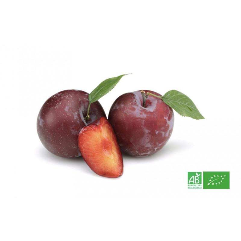 Prune rouge bio d'Europe du Sud cultivée selon les méthodes strictes de l'Agriculture Biologique