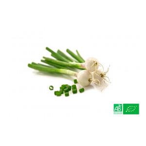 Oignon blanc en botte Alsace Lorraine