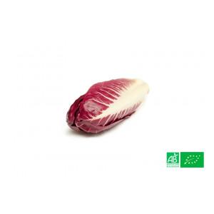 Endive rouge 500gr cultivée dans nos champs selon les normes AB