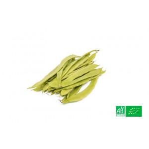Haricots beurre plats bio cultivés dans notre potager bio en Alsace Lorraine - Ferme VEGETAL RESPEKT