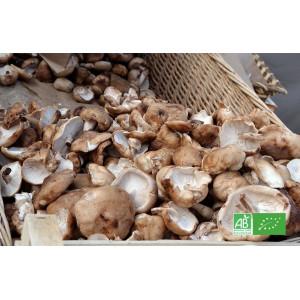 Champignon Shiitaké bio frais d'Alsace, producteur champignionniste bio en Alsace Moselle