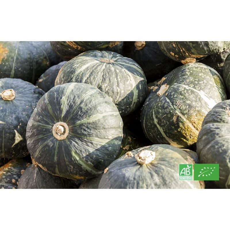 Courge Sweet Mama biologique cultivée dans les champs de MA-FERME-BIO.com