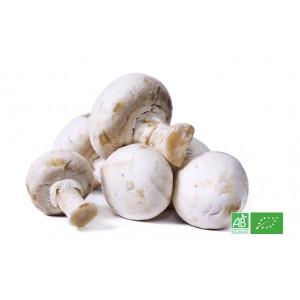 Champignon blanc de Paris bio cultivé selon la charte AB ECOCERT pour notre ferme bio en Alsace Moselle
