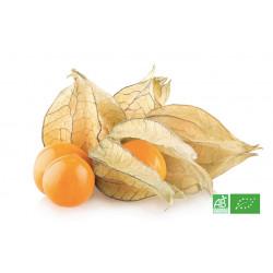 Physalis biologique cultivé par nos partenaires producteurs fruitiers bio pour MA-FERME-BIO.com en Alsace Moselle