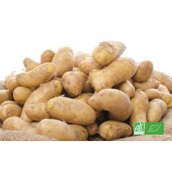 Pomme de terre Ratte bio cultivée selon les préceptes d'Agriculture Biologique par le maraicher producteur bio en Alsace Moselle