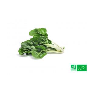 1kg de Blette verte ou bette à carde bio du producteur maraicher bio, livraison GRATUITE sur points relais en Alsace et Moselle