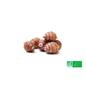 Topinambour cultivé aux normes bio AB dans les champs de notre ferme écologique VEGETAL RESPEKT