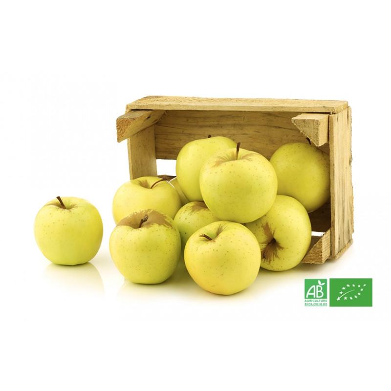 Pommes Golden 500gr cultivées selon les normes bio AB pour notre maraicher bio VEGETAL RESPEKT en Alsace Lorraine